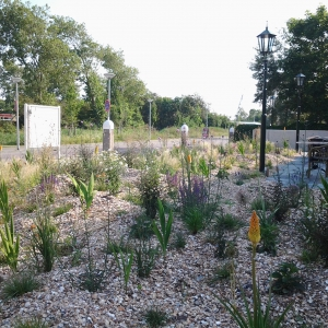 Schelpensplit in onderhoudsarme tuin